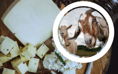 Producción de leche de cabra y elaboración de sub productos